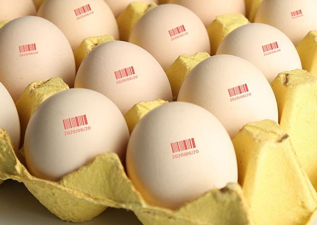 Eggs coding